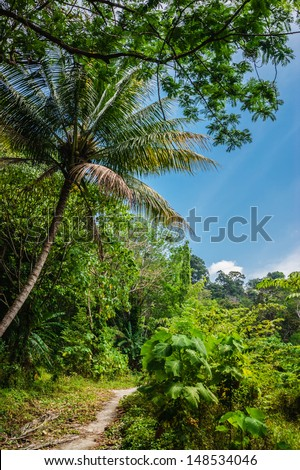 Tropical landscape in Phuket Thailand