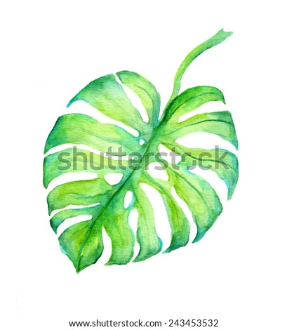 Tropical leaf of exotic monstera tree. Watercolour - stock photo