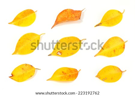 Tropical leaves isolated set - stock photo