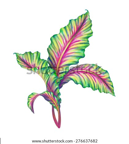 tropical leaves watercolor illustration, exotic foliage isolated on white background - stock photo