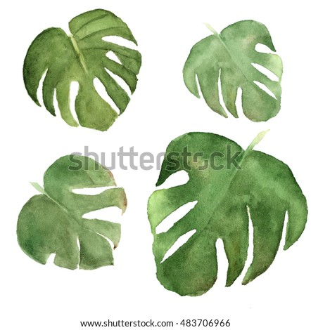 Tropical leaves. Watercolor painting on white background