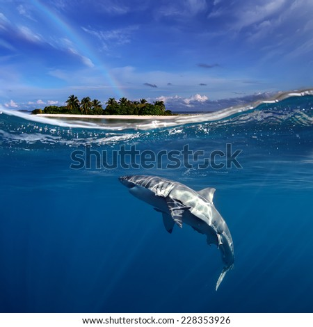 Tropical maldivian island in daylight with rainbow and Great White Shark underwater - stock photo