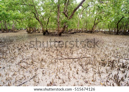 Tropical mangrove forest at coast.