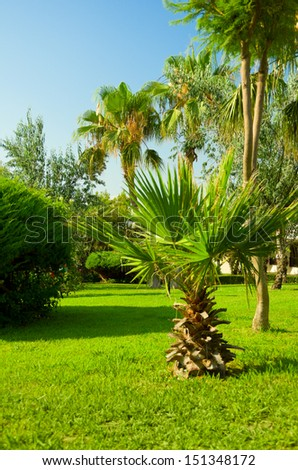 Tropical ornamental garden with palm trees