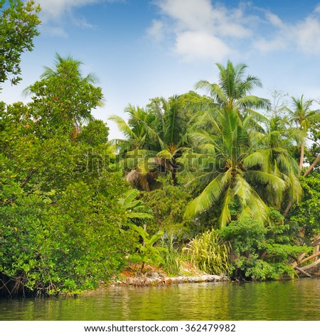 Tropical palm forest on the river bank - stock photo