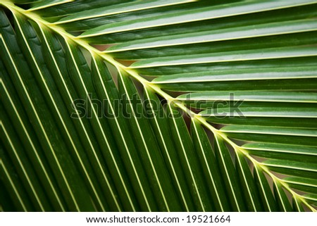 Tropical palm frond - stock photo