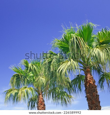 tropical palm on background of blue sky - stock photo