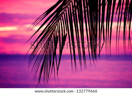 Tropical palm tree - stock photo