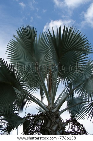 Tropical palm tree against beautiful blue sky in Asia - stock photo