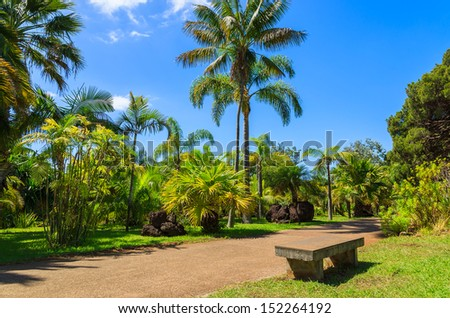 Tropical palm tree and alley with bench, Jardim Botanical Gardens in Funchal town, Madeira island, Portugal - stock photo