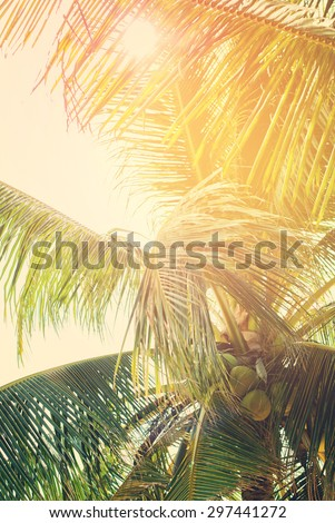 Tropical Palm Tree through Leaf Passes Sun. Effect faded retro photo. Retro filtered Background - stock photo