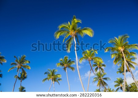 Tropical palm trees against clear blue sky - stock photo