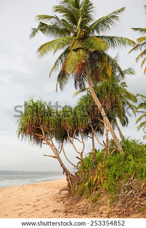 Tropical palm trees at the ocean shore under the gloomy skies - stock photo