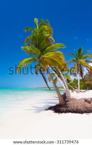 Tropical palm trees in Punta Cana, Dominican Republic - stock photo