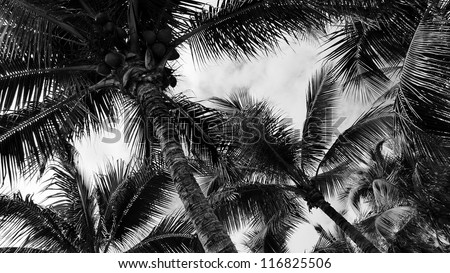 Tropical palm trees, low angle view - stock photo