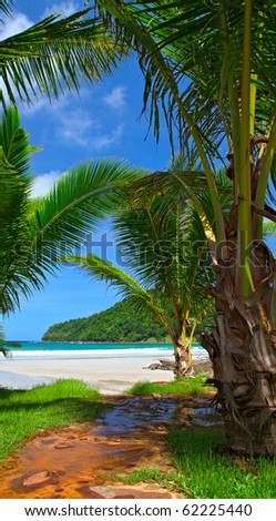 Tropical palm trees near the sea