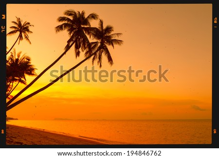 Tropical palm trees on beach at sunset, retro film stylized