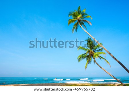 Tropical palm trees on ocean beach at day light time - stock photo