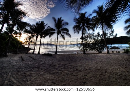 Tropical Palms - stock photo