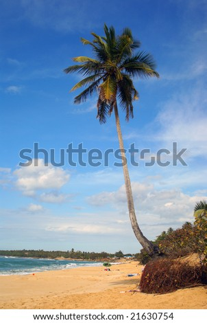 Tropical paradise beach with single palm tree vertical - stock photo