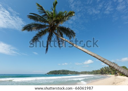 Tropical paradise idyllic beach with palm. Sri Lanka - stock photo
