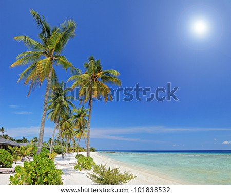Tropical paradise in Maldives island with sandy beach, palm trees and turquoise sea