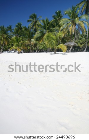 Tropical Paradise - White Sands Beach, Caribbean Coconut Palm Trees background suitable for a variety of traveling and advertising designs - stock photo