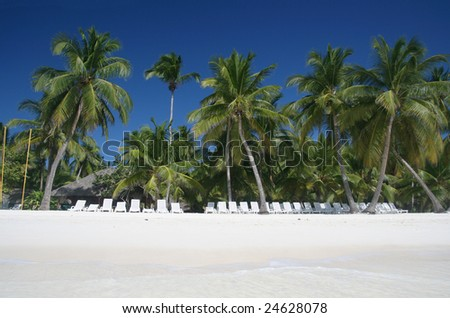 Tropical Paradise - White Sands Beach, Lounge Chairs and Coconut Palm Trees background suitable for a variety of traveling and advertising designs - stock photo