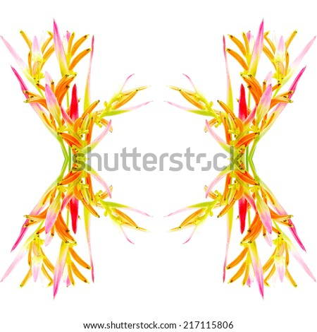 Tropical pink and orange Heliconia flower, Heliconia psittacorum Sassy, isolated on a white background - stock photo