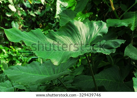 Tropical plant in greenhouse, close-up - stock photo