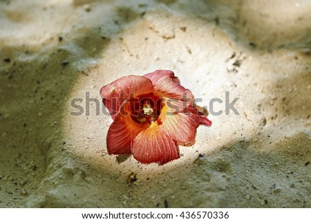 tropical plant in the wild in Maldives - stock photo
