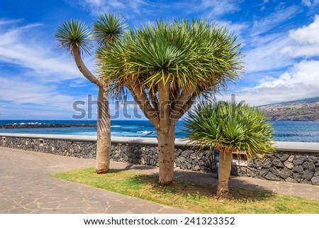 Tropical plants along ocean in Puerto de la Cruz, Tenerife, Canary Islands, Spain - stock photo