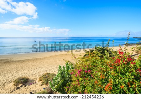 Tropical plants and flowers along a beach in Morro Jable holiday village, Fuerteventura, Canary Islands, Spain  - stock photo