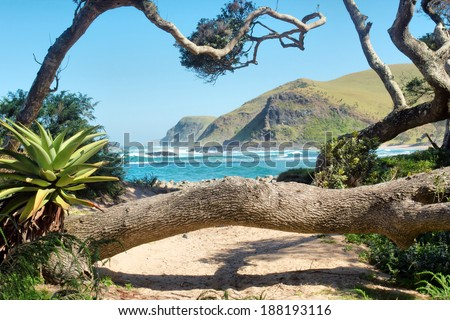Tropical plants and trees on beach. Shot in Coffee Bay, Eastern Cape, South Africa. - stock photo