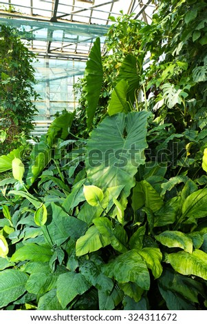 Tropical Plants in greenhouse at botanic garden - stock photo