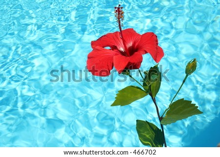 Tropical pool - stock photo