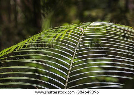Tropical primary rain forest in Penang, Malaysia  - stock photo
