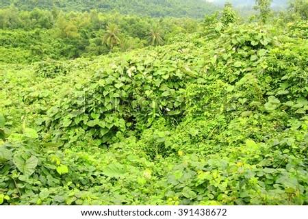 Tropical rain forest - stock photo