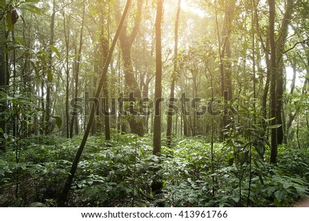 Tropical Rain forest Landscape from Chiangmai the North of thailand ,and soft flare filter - stock photo