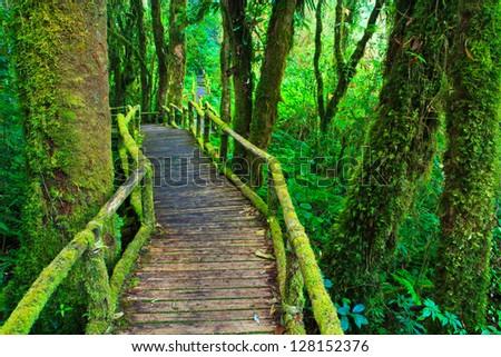 tropical rain forest path asia thailand - stock photo
