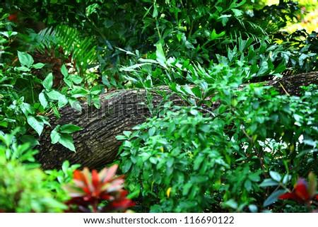 Tropical Rainforest - stock photo