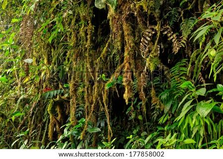Tropical rainforest, Amazon,  Yasuni, Ecuador - stock photo
