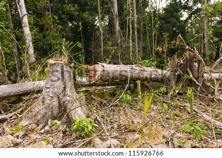 Tropical rainforest cut for agriculture in the Ecuadorian Amazon - stock photo