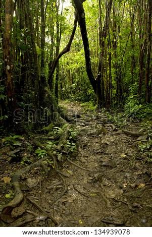 rainforest essay Deforestation of the amazon rainfores- humanities essay deforestation of the amazon rainforest gcse humanities coursework this essay will investigate the.