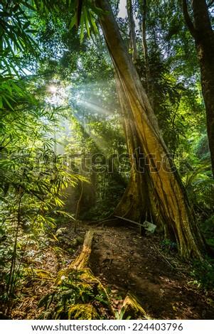 tropical rainforest,Khao Yai National Park Thailand - stock photo