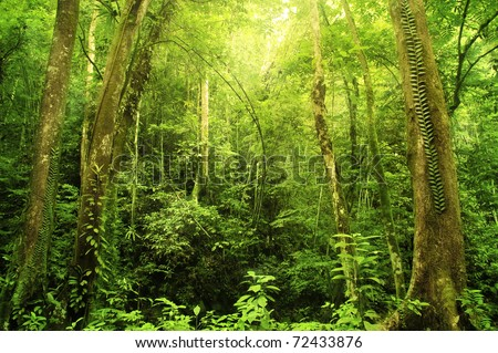 Tropical Rainforest Landscape, Malaysia, Asia - stock photo