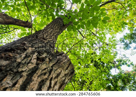 Tropical rainforest tree with green leaves glowing in sunlight