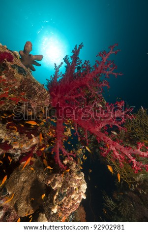 Tropical reef and fish in the Red Sea - stock photo