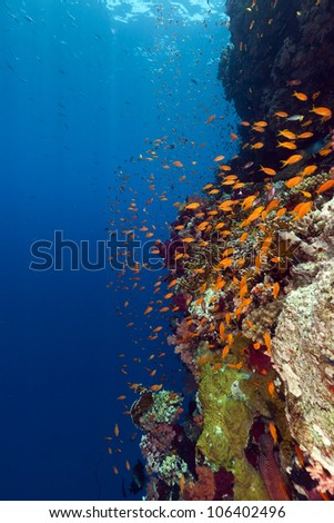 Tropical reef in the Red Sea - stock photo