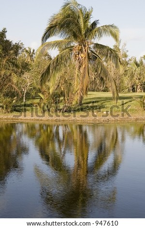 Tropical reflection - stock photo
